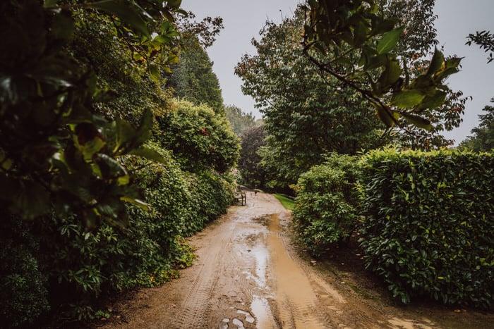 ainslea-tim-mount-tomah-botanic-gardens-loxley-on-bellbird-kurrajong-253