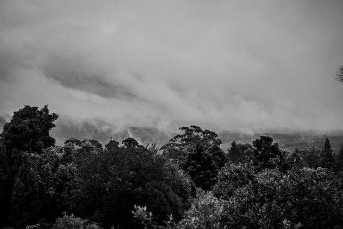 ainslea-tim-mount-tomah-botanic-gardens-loxley-on-bellbird-kurrajong-332