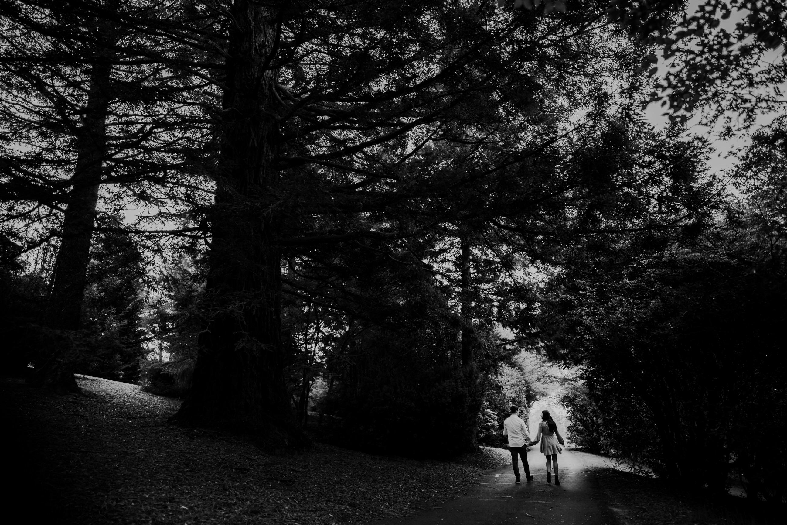 ava-me-photography-mikaela-jesse-mt-tomah-blue-mountains-botanic-gardens-engagement-53